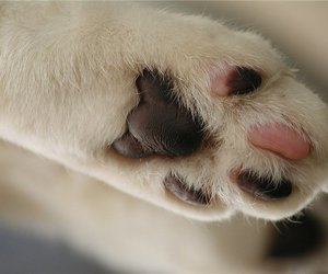 cat, amazing, and paw image