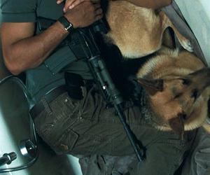 dog and will smith image