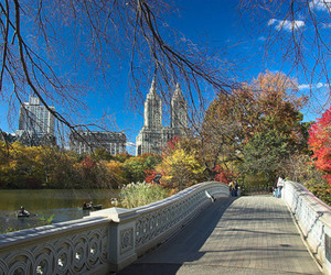 Central Park and new york city image