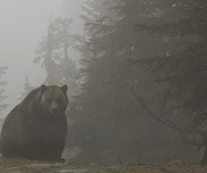bear and beauty image