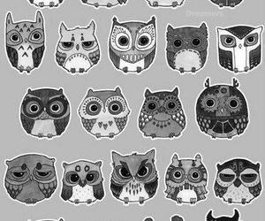 owl and corujas image