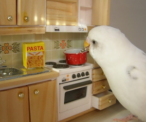 bird, cute, and cooking image