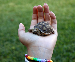 turtle, animal, and photography image