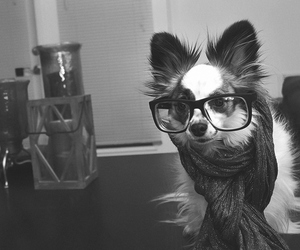 dog, funny, and glasses image