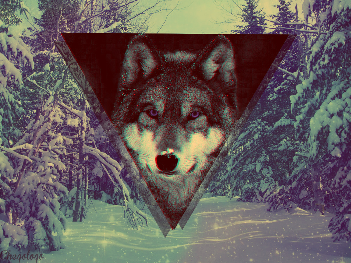 Snow Wolf Discovered By Serch Birth Lawliiet On We Heart It