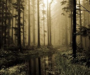 nature, forest, and black and white image