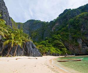beach, palm trees, and palms image
