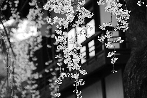 Black And White Flowers Monochrome Photography Inspiring Picture On Favim