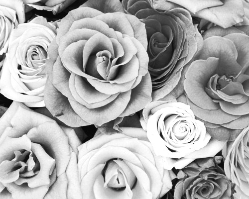 Black And White Floral Flower Flowers Grey Inspiring Picture