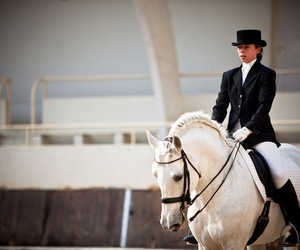 dressage, perfction, and horse image