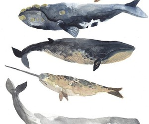 drawing, whale, and whales image