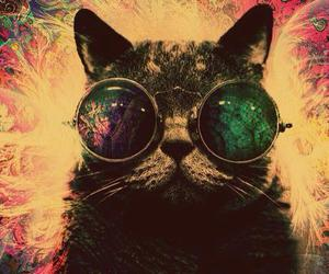 cat, cool, and glasses image