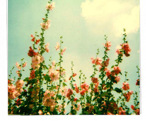 flowers and vintage image