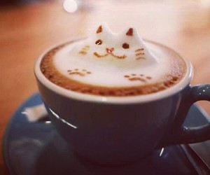 cat and coffee image