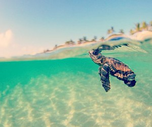 turtle, sea, and beach image