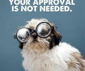 quotes, dog, and approval image