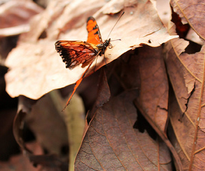 beautiful, butterfly, and photography image