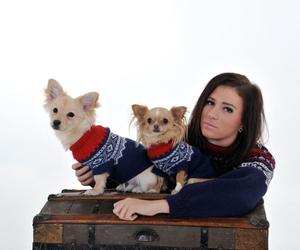 chihuahuas, dogs, and family image