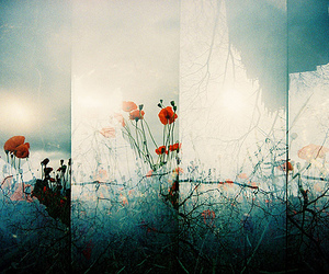 35 mm, lomo, and photography image
