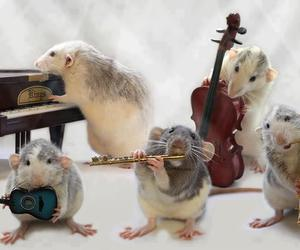 music, mouse, and band image
