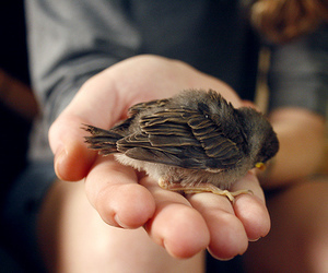 baby, cute, and bird image