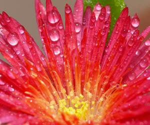 drops, nature, and panasonic image