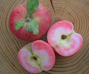 apple, peach, and photography image