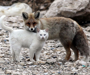 cat, fox, and animal image