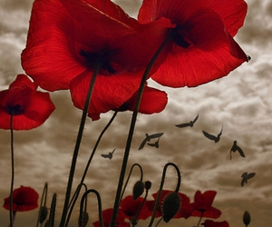 birds, poppy, and red image