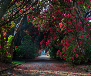 color, garden, and path image