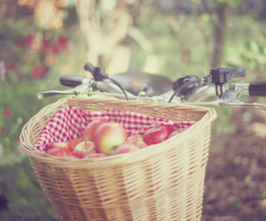 apples and photography image