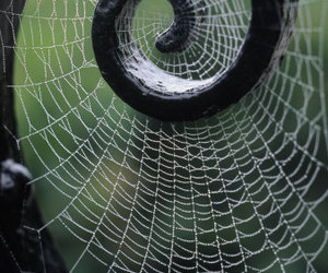 web, spider, and spiral image