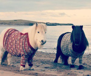 pony, cute, and sweater image
