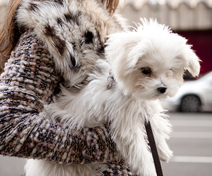 chic, coat, and dog image