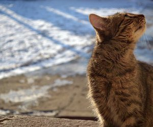 winter, cat, and photography image