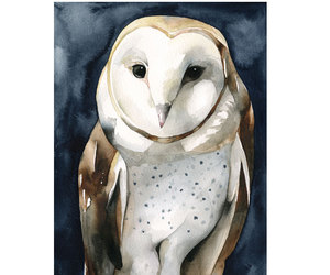 art, illustration, and owl image