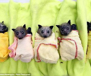 baby bats image