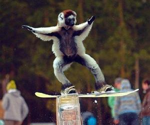 snowboard, animal, and funny image