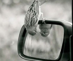 bird, mirror, and car image