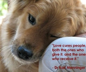 animal, puppy, and love image
