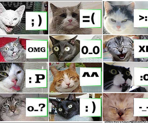 cats, funny, and cat image