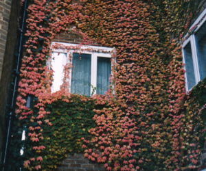 brick wall, decoracao, and nature image