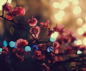 cool, flowers, and lovely image