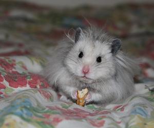 aww, eating, and hamster image