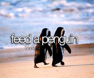 penguin, feed, and cute image