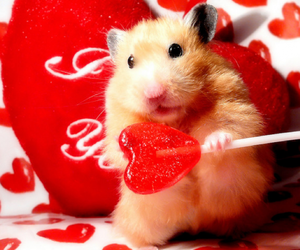 love, cute, and hamster image
