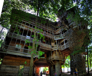 tree, house, and treehouse image