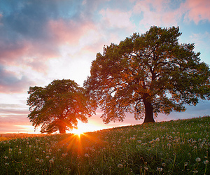 meadow, nature, and trees image