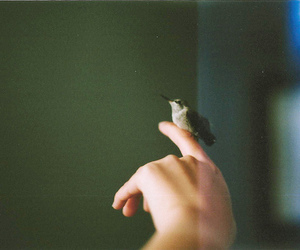 bird, retro, and hand image