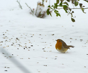 birds, photography, and snow image